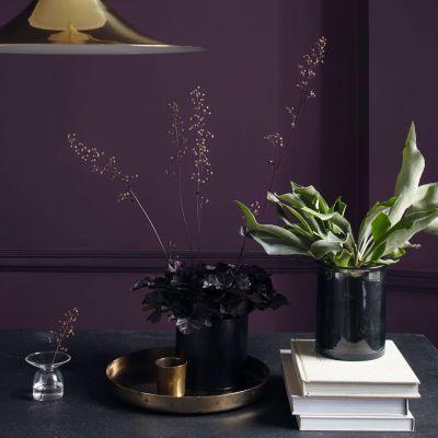 Dulux-heritage-wild-blackberry-plant