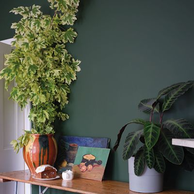 Farrow & Ball Colour by Nature - Duck Green